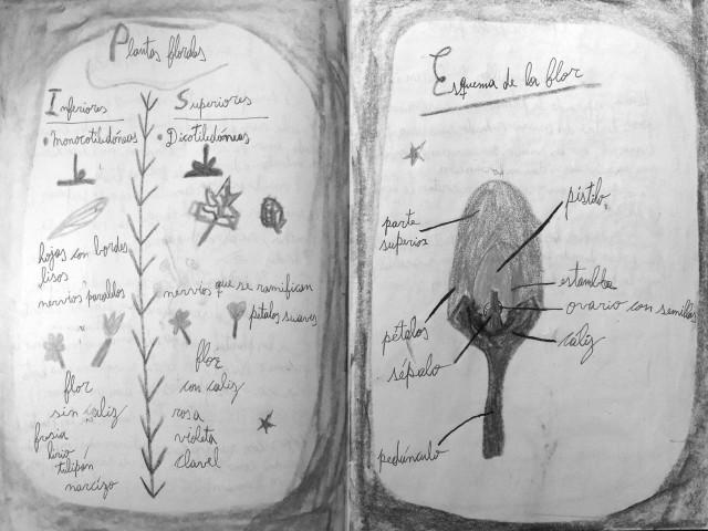 botanica-luca-mancuso2